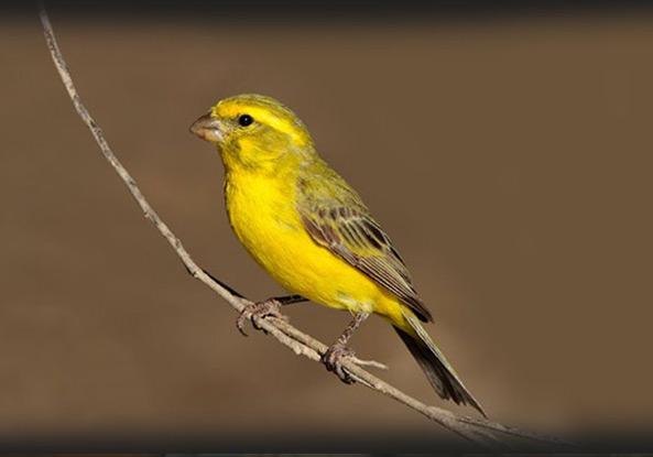 birdbanner