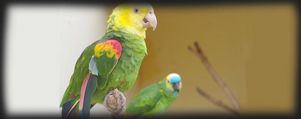 parrot2