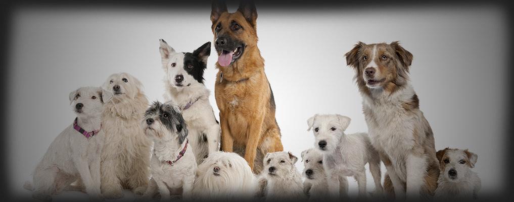 doggroup