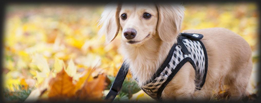 dresseddog